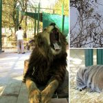Lujan Zoo Buenos AIres